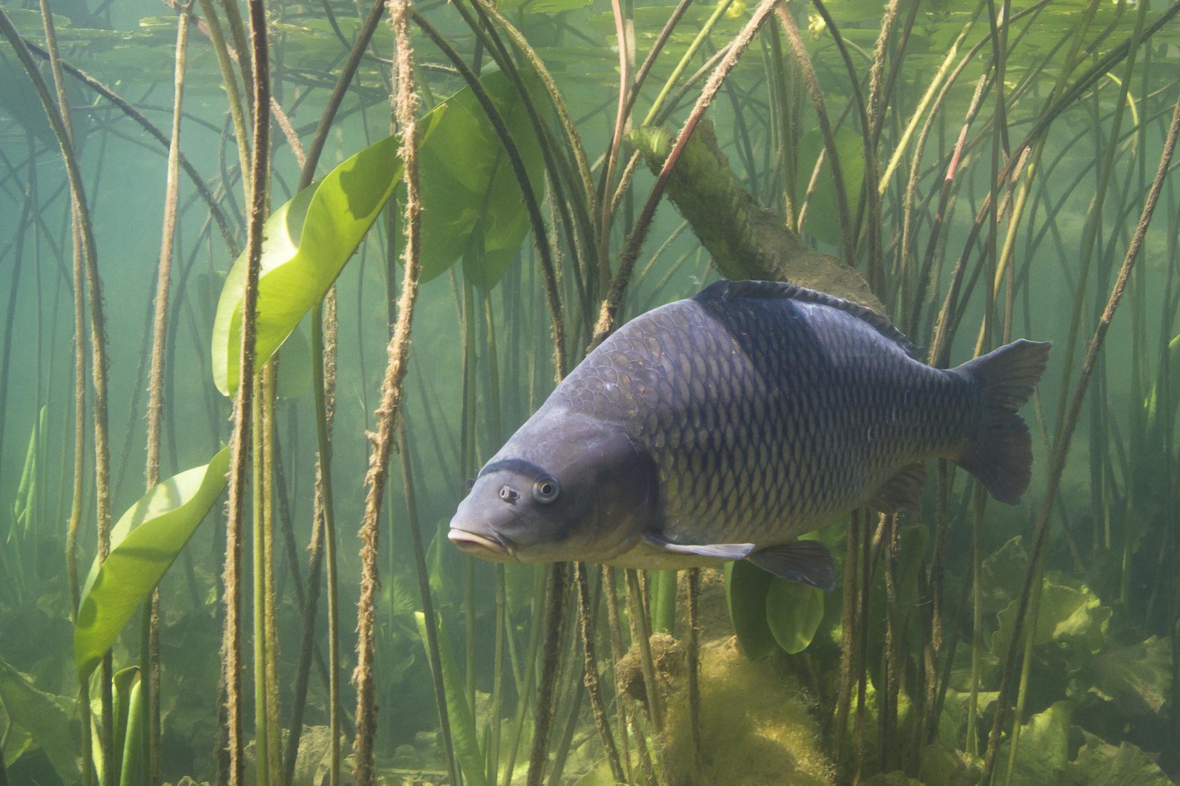 schonzeiten bayern angeln